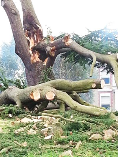 """Ha olyan céget keres, amelynél a veszélyes fák kivágása a lehető legzökkenőmentesebb, érdemes a Veszelyes-fakivagas.hu weboldal megtekintenie. Mert temérdek olyan helyzet adódik, amikor a """"házi"""" favágás nem biztonságos, egy vezetékekre vagy éppen a tetőre ráhajló terebélyes fa, esetleg mondjuk egy 30-40 méter magas fenyő már bőven az a kategória, amikor szakemberre van szükségünk."""